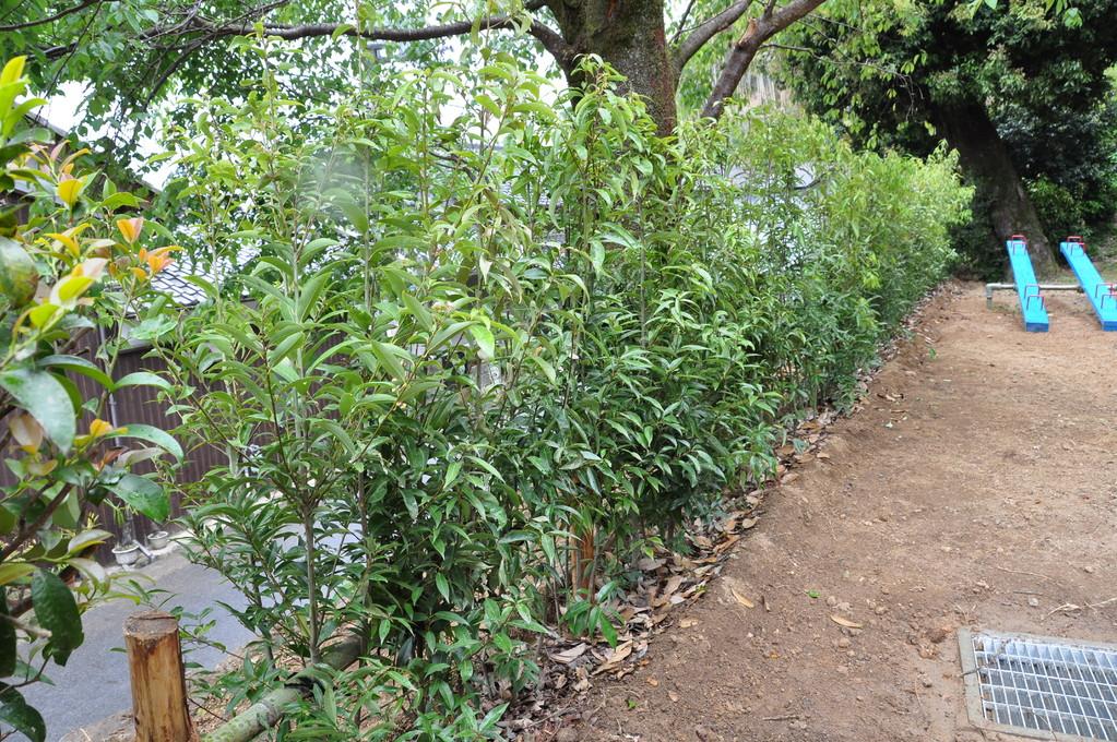 子供たちを樫の木の柵でガードします。