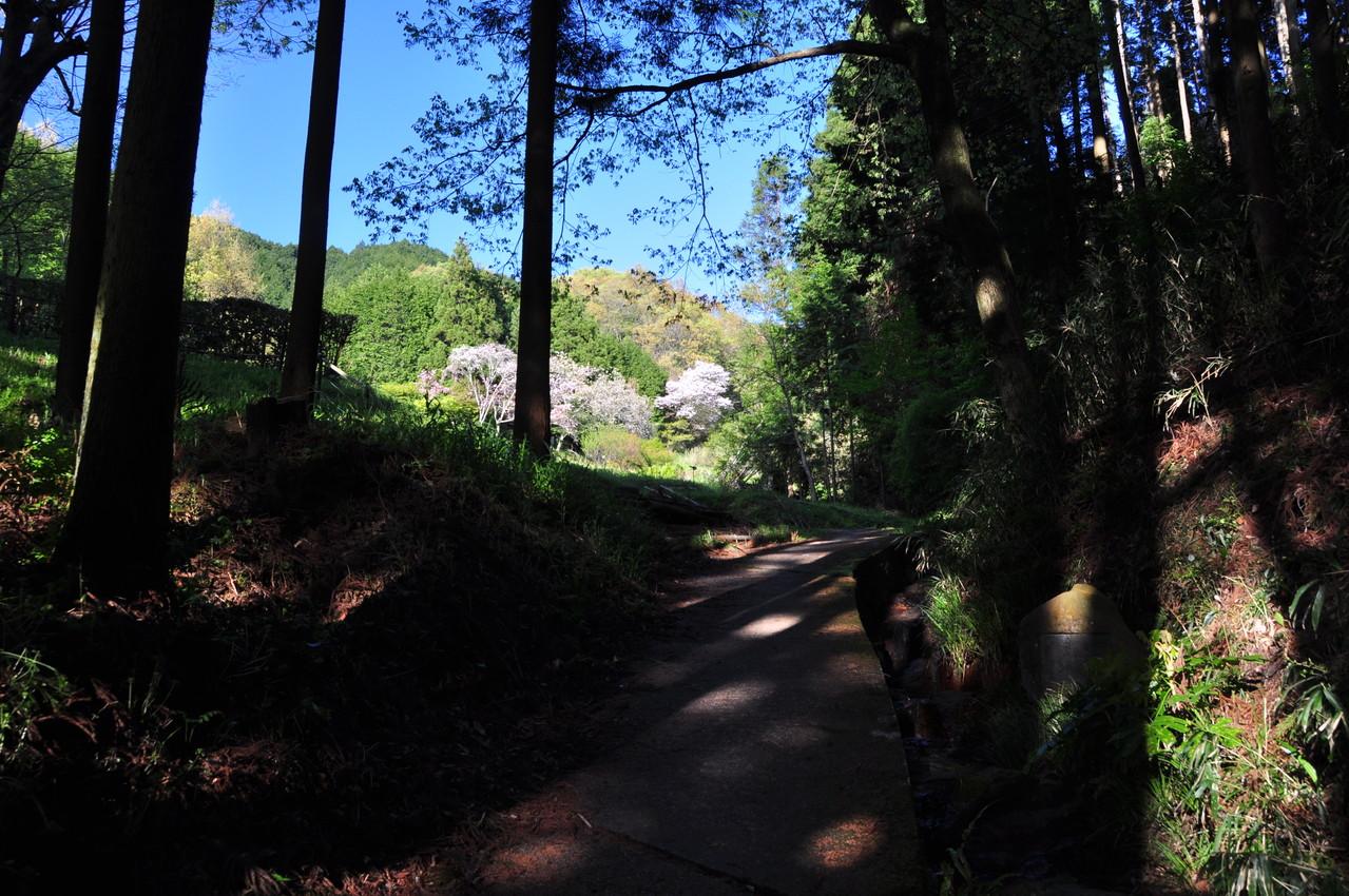 舒明天皇陵の横の小路を抜けると・・・そこは、万葉の世界。