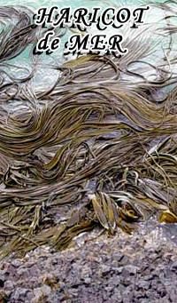 algue alimentaire, algues bretonne, haricot de mer, spaghetti de mer