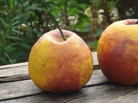 Beton- Äpfel