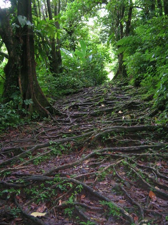 Weg zum Middleham Fall