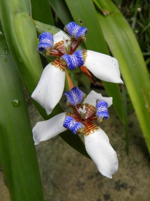 eine der 75 Orchideen Arten auf Dominica