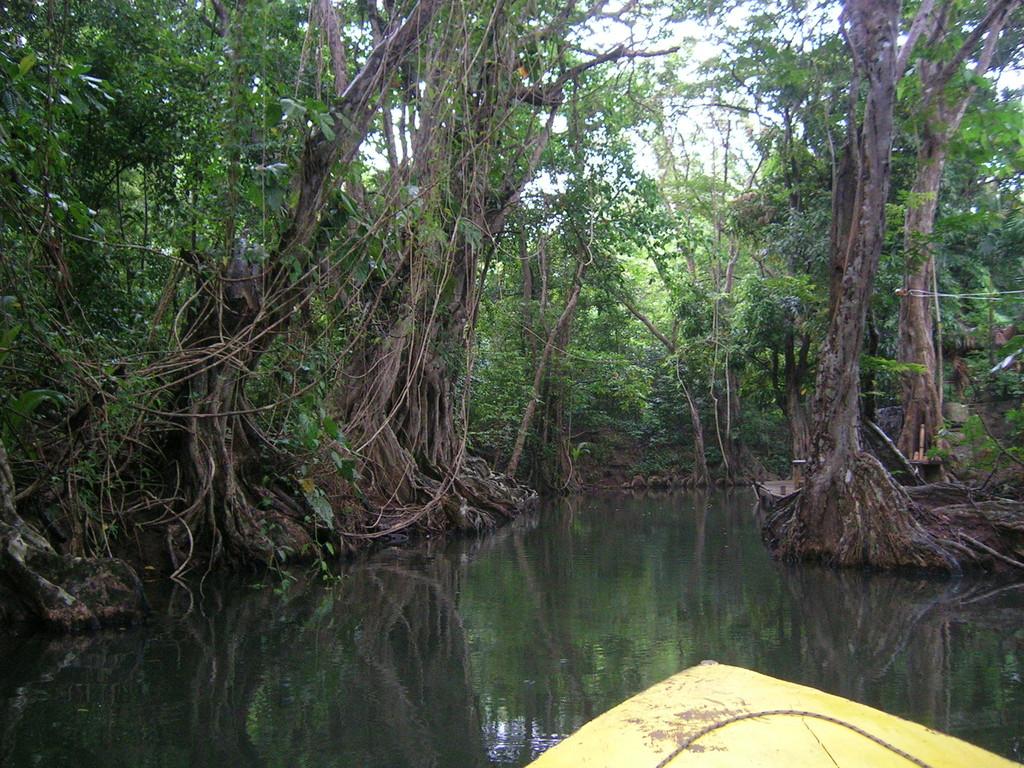 Bootsfahrt auf dem Indian River durch das Sumpfgebiet