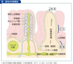腸管細胞が破壊される
