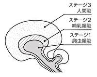 ◆三つの脳の連携が大切◆