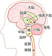 ◆脳を科学的に知る◆