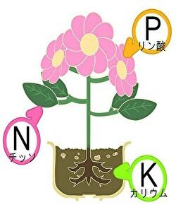 植物の必須微量要素
