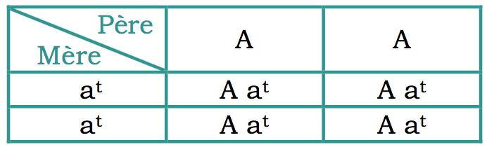 carré de pulnett d'un mariage entre une femelle feu homozygote (at at) et un mâle agouti homozygote (A A) : les petits sont hétérozygotes ( A at), c'est à dire agouti (car dominant) porteur feu