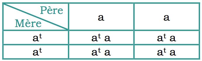 """carré de pulnett d'un mariage entre une femelle feu homozygote (at at) et un mâle non-agouti homozygote (a a) : les petits sont hétérozygotes ( at a), c'est à dire feu (car dominant)  porteur """"non-agouti"""""""