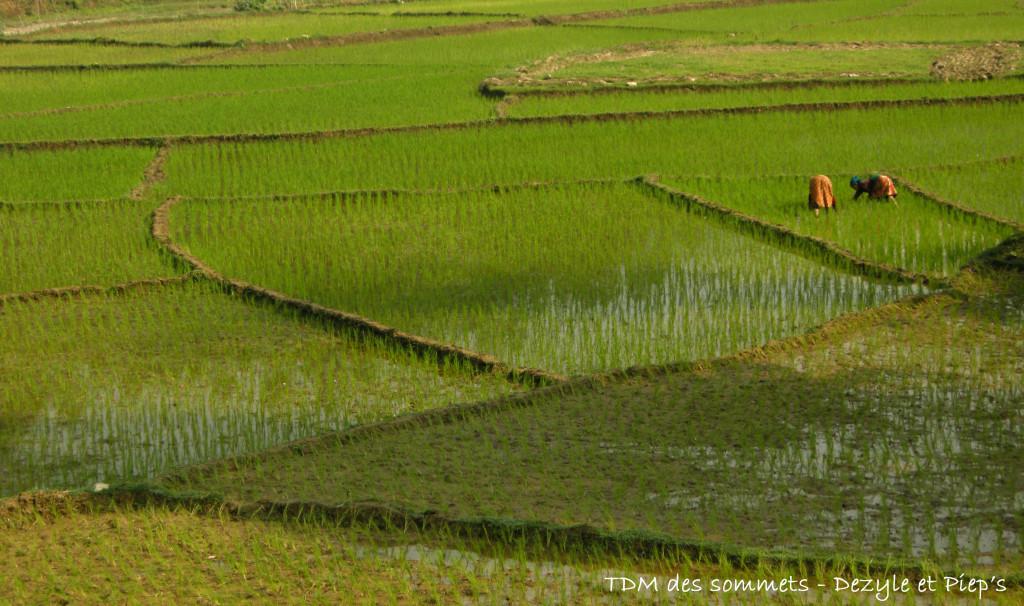 Rizières entre Pokhara et Katmandou