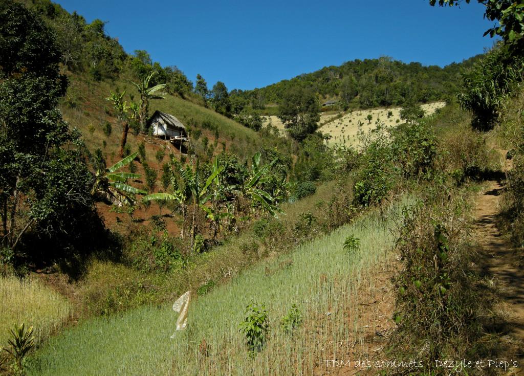 Trekking autour de Kalaw