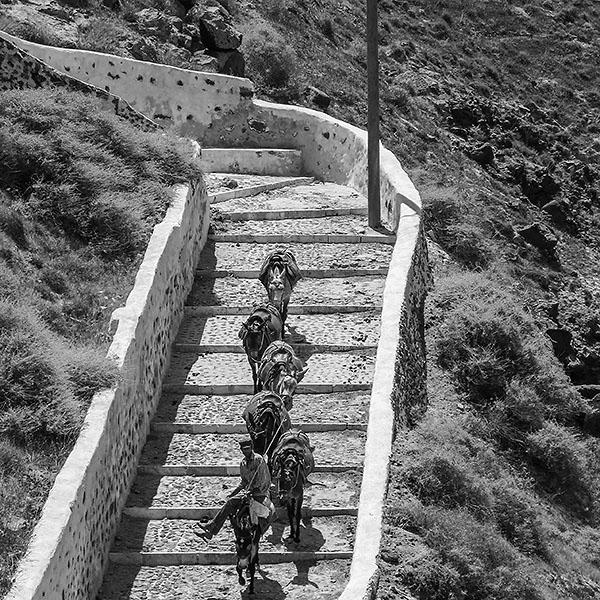 Gruppe von Eseln auf dem Weg nach unten. Foto Klaus Schoerner