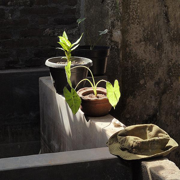 Stilleben in einer bäuerlichen Pflanzenzucht, Java. Foto: Klaus Schoerner