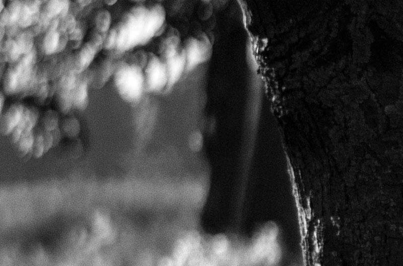 Detail Bildrand 100% Crop aus Fotomotiv Landstraße: Triotar 4/13,5 cm für Exakta an Nikon Z7. Foto: bonnescape.de
