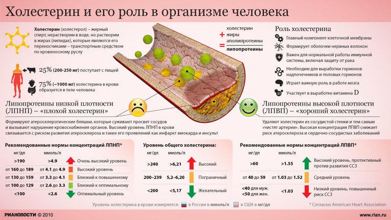 Холестерин и его роль в организме