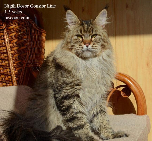 Nigth Dosor Gonsior Line 1.5 years