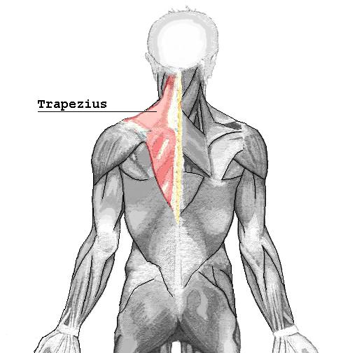 Cómo fortalecer el trapecio, uno de los músculos que solemos olvidar.