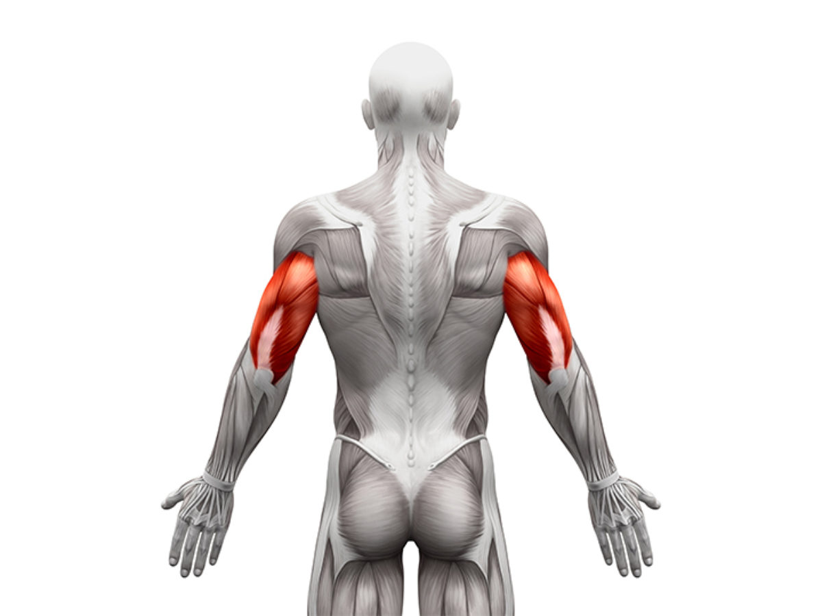 La importancia del tríceps para nuestros brazos.