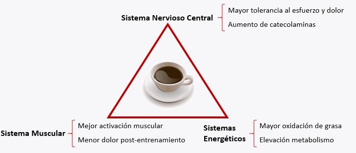 beneficios cafeína