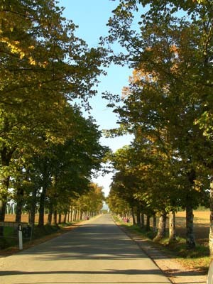 この美しい並木道を通るうちに、気持ちが静かになります。