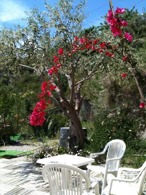 こんな庭でランチもいい。