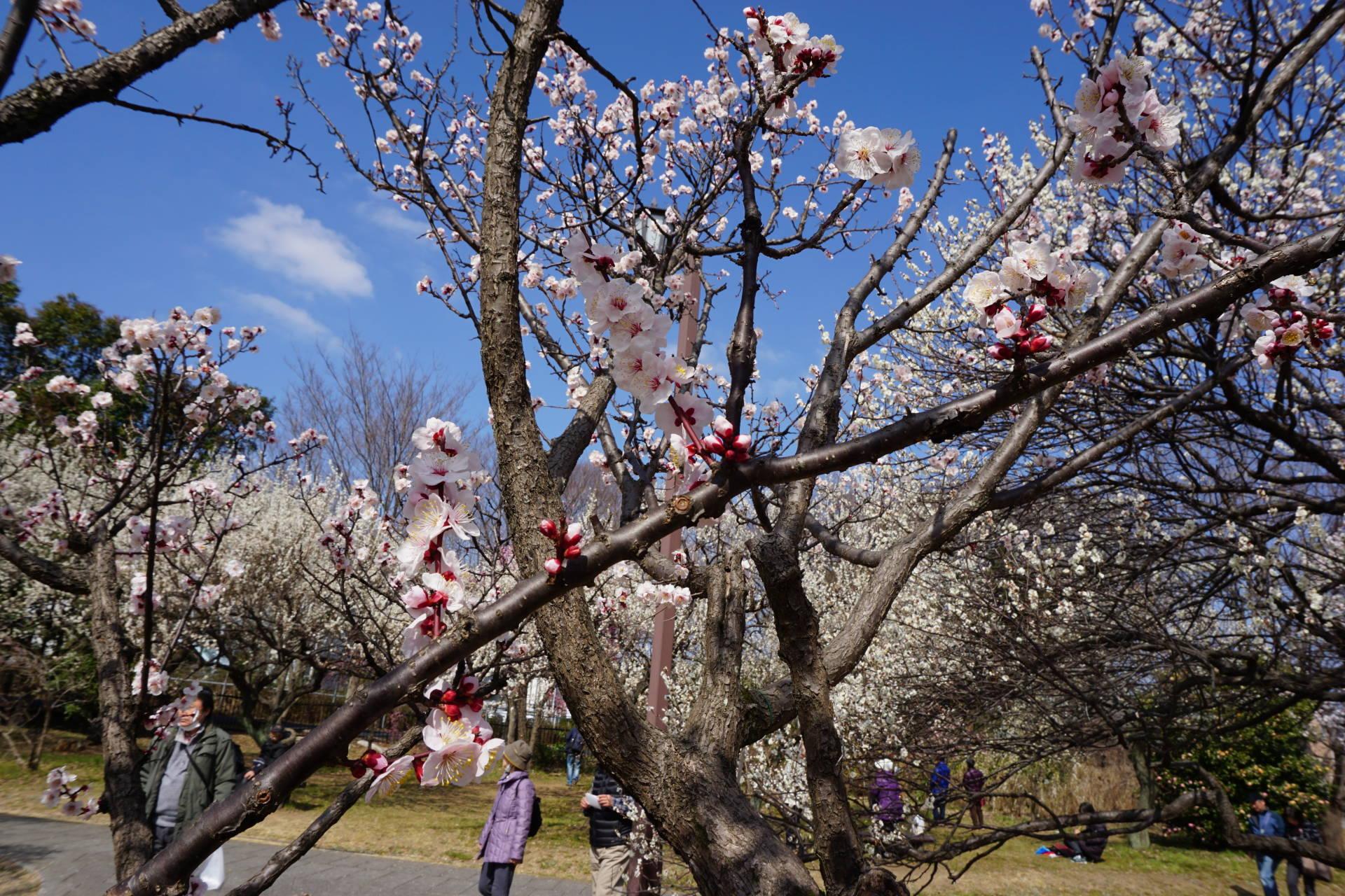 平成28年度-令和元年度の写真を掲載しています。
