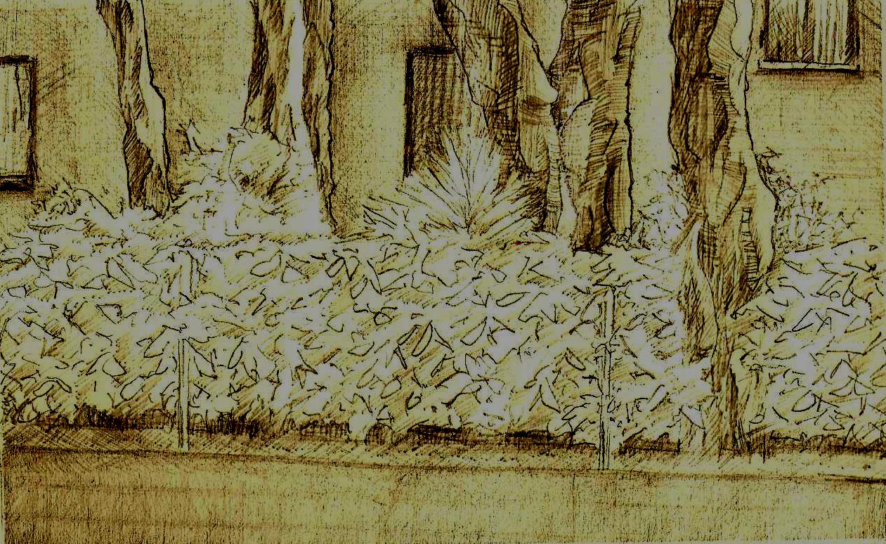 AL DELTA DEL PO (ROSOLINA MARE)     Buntstifte auf Papier - 29 x 21 cm