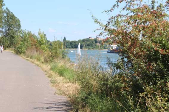 Der Rhein ganz nah