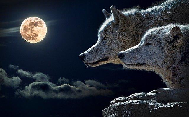 Vollmond-Wolfsmond in Löwe - Schicksalshafte und glückliche Manifestation, du bist mutiger, als dir bewusst ist!