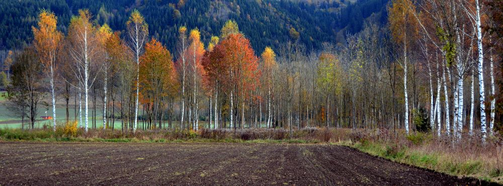 Manfred Grabner - Herbstwald bei Pöls