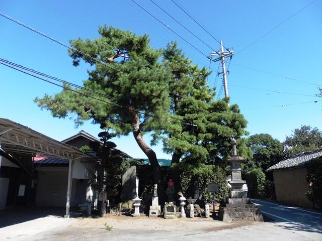 高松宮殿下 手植えの松