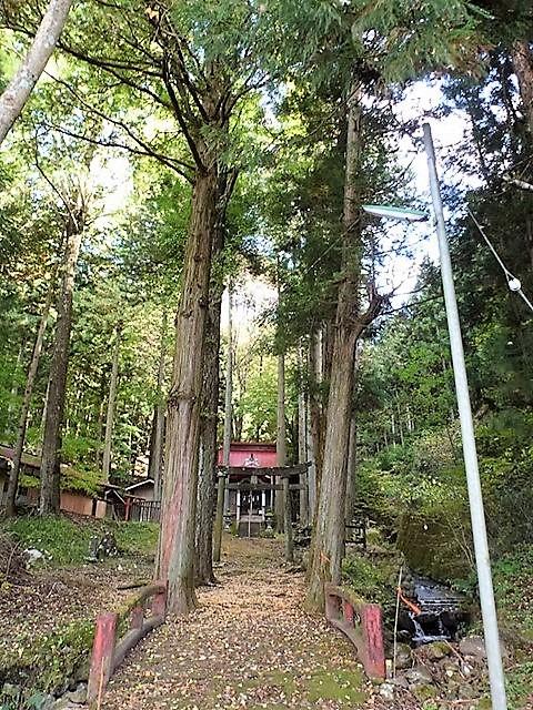 川戸浅間神社の大杉