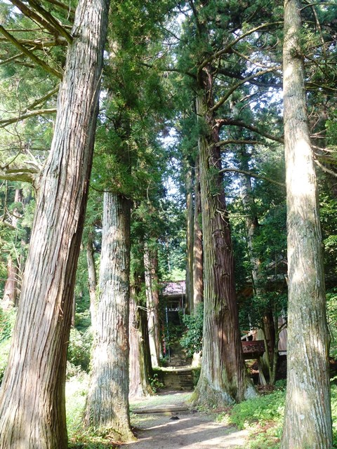 藤原秀郷 手植えの大杉(中山三島神社)