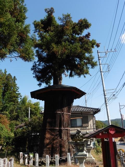 神代杉(矢倉鳥頭神社)