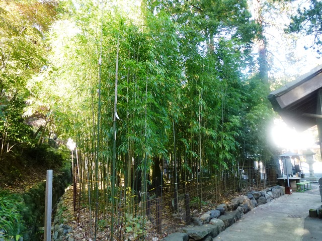 泉龍院の純四稜形竹