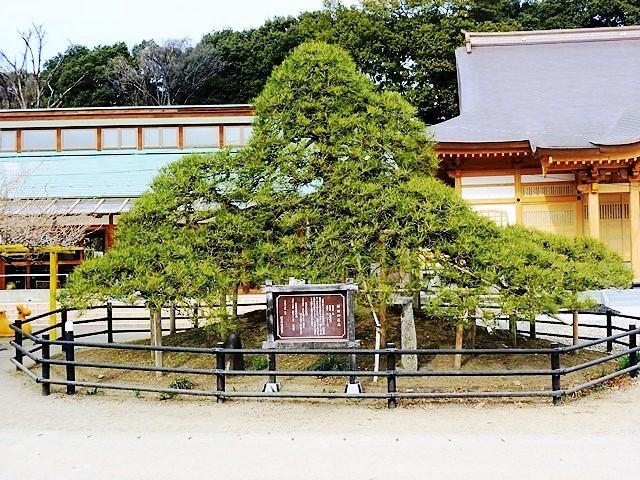 新田義貞 冠掛の松(大通寺)