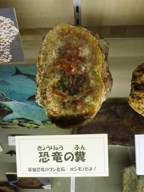 恐竜の糞(大間々博物館)