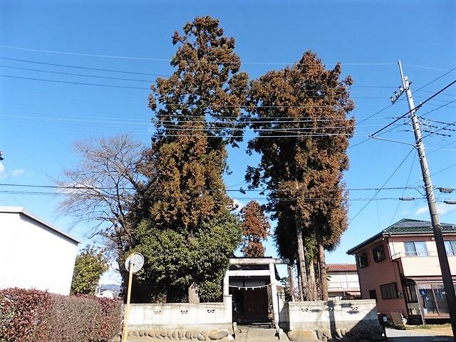 榛名木戸神社の大杉