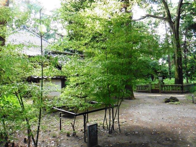 栄朝禅師の仏頂竹(長楽寺)