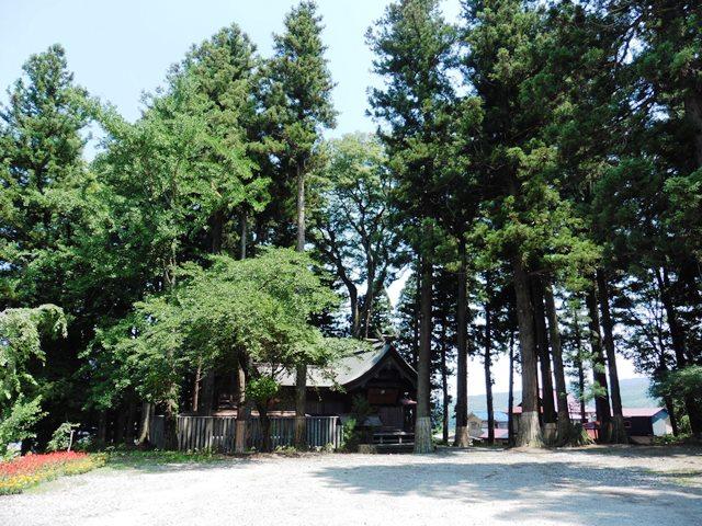 伊勢宮の杉の森
