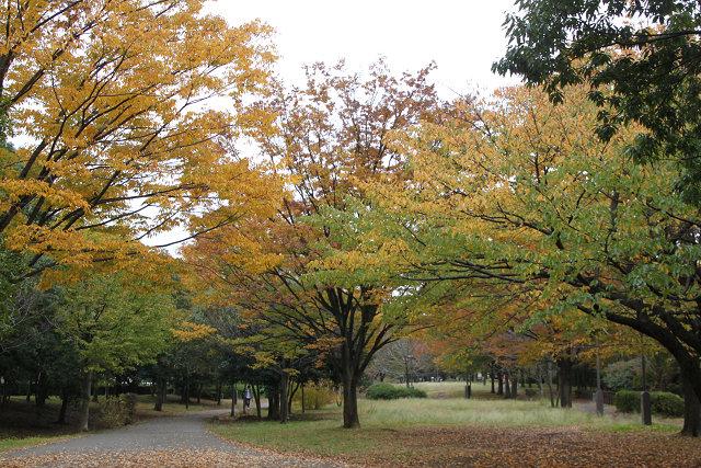 山崎公園から くさぶえの道を 牛久保公園方向に進む