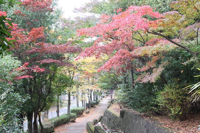 ささぶね橋を渡り 渋沢橋に行く手前(ささぶねの道)