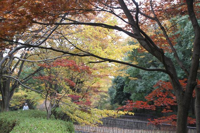 山崎公園出入り口から くさぶえの道を望む