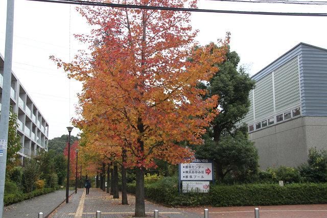 都筑地区センター前の遊歩道