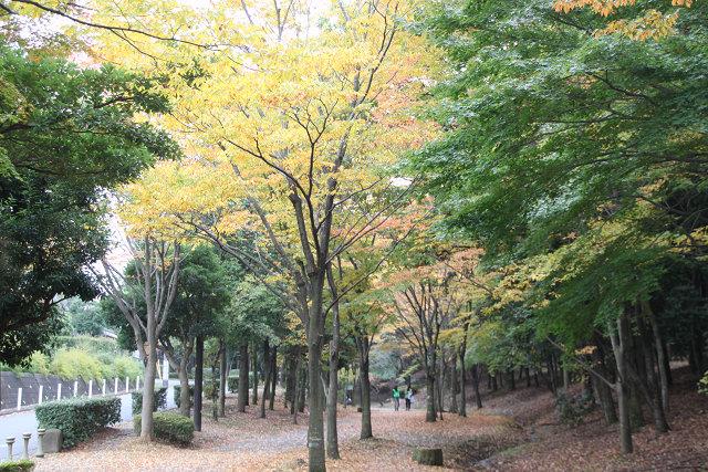 渋沢橋から心行寺方向へ