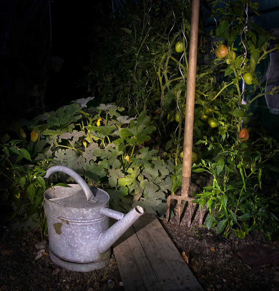 Jardin dévoilé - Danielle Bonardelle