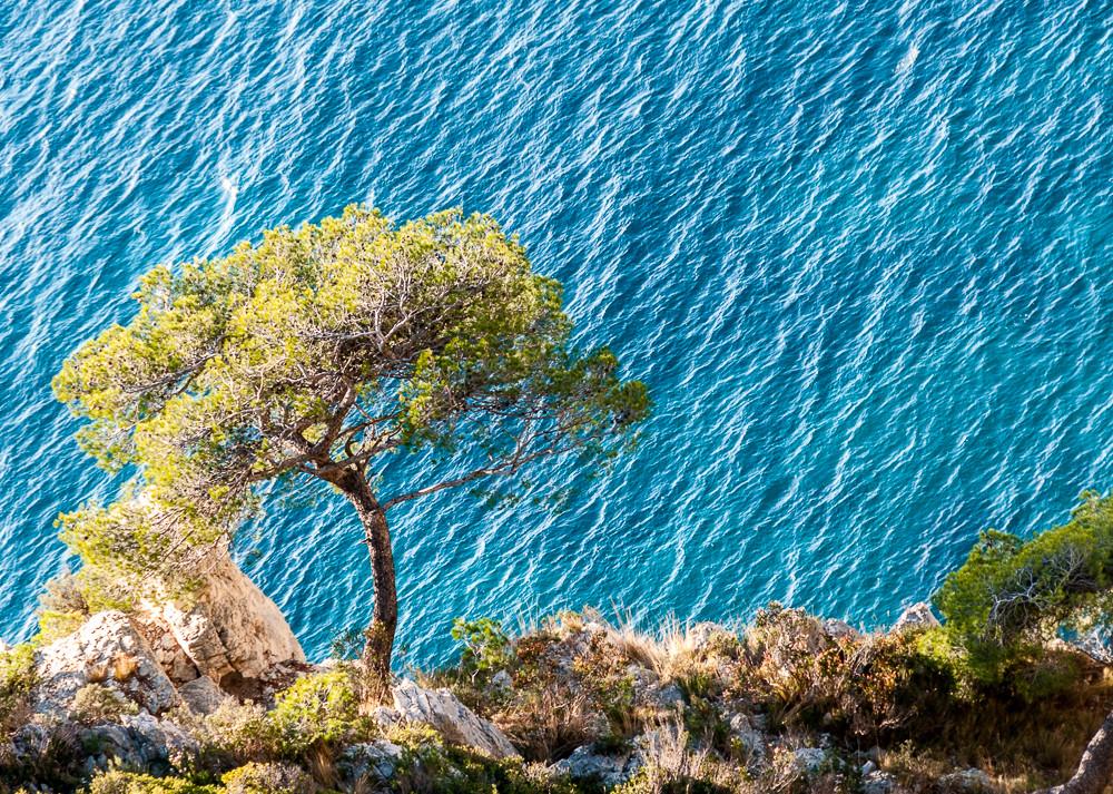 L'arbre qui défie la pesanteur