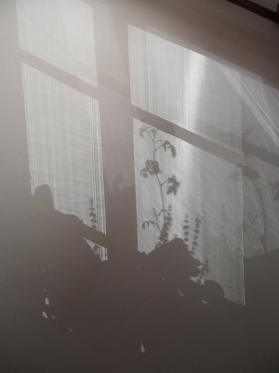 Ombre au plafond