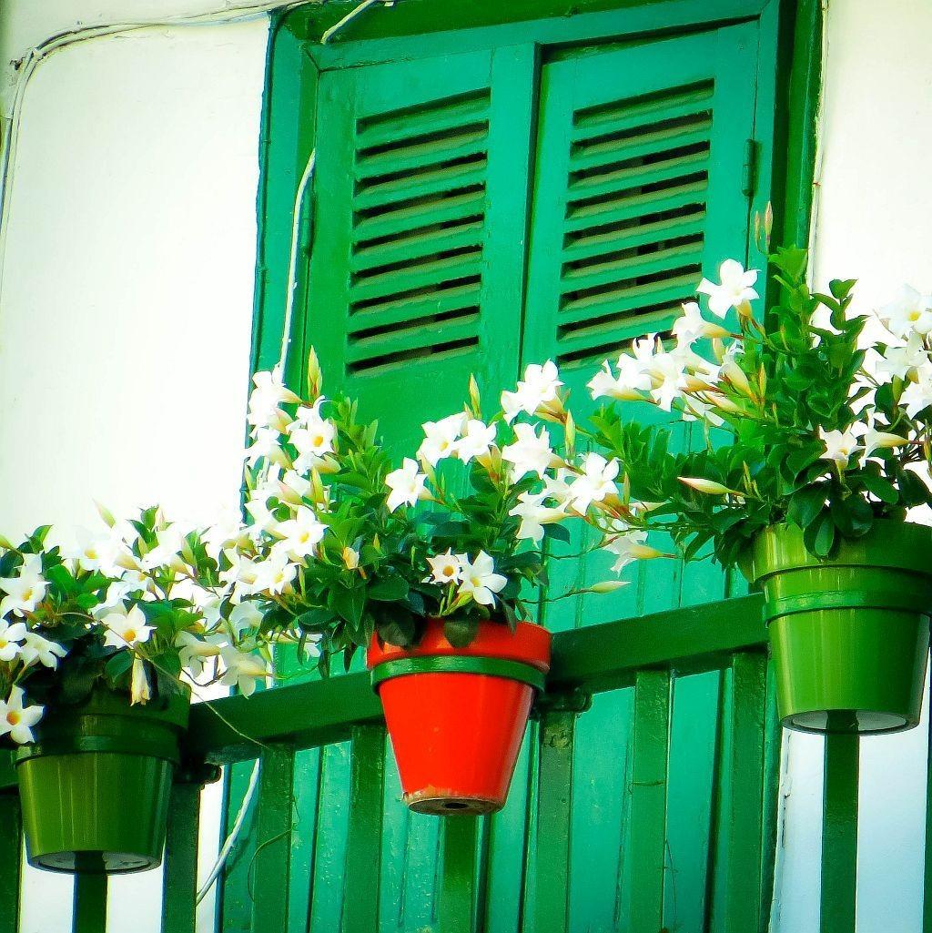 Fleurs au balcon - Marie-Agnès Barrère