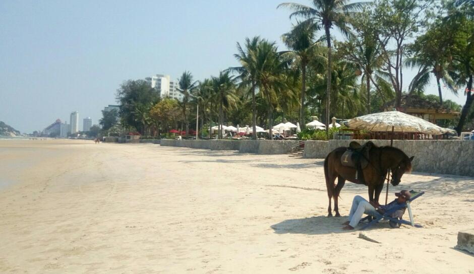 Auch das Pferd braucht Schatten, bevor die Gäste kommen.